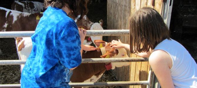 """""""Von der Kuh zu uns auf dem Frühstückstisch"""" – Die 4. Klasse besuchte am 07.06.2016 Gut Merkendorf, Fam Porzelt"""